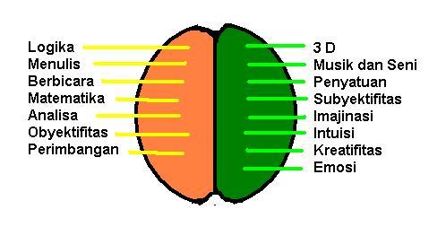 Ini dia Perbedaan Otak Kiri dan Otak Kanan